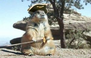 Pirate_squirrel_1