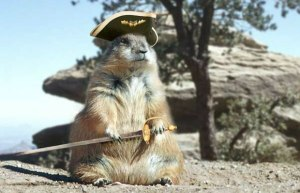 Pirate_squirrel_1