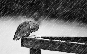 bird-in-the-rain-sad-songs-35803545-1600-1000