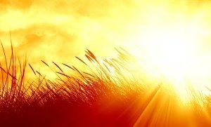 intense_sun_by_arghus